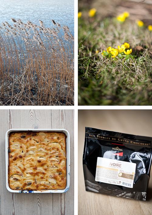 Lyngby sø, erantis, æblekage og chokolade