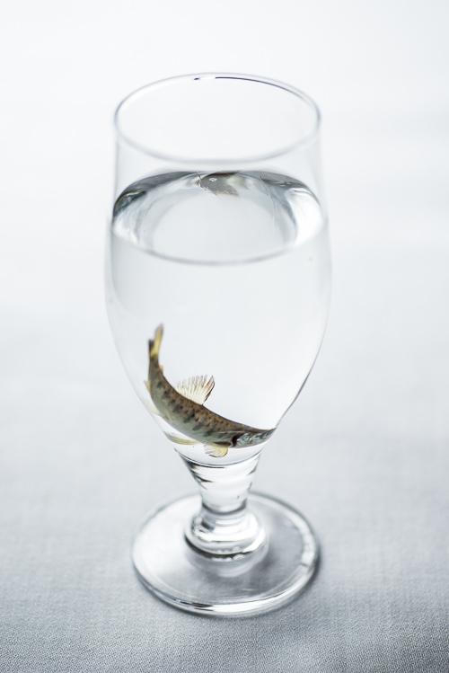 Fisk til de modige
