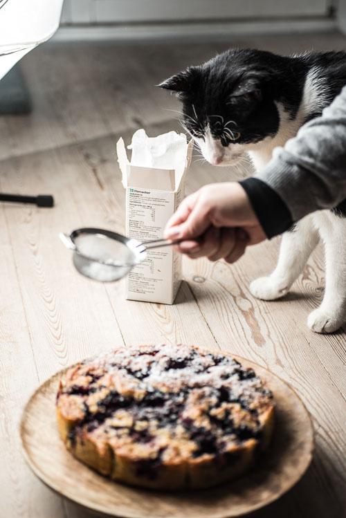 Behind the scenes: En nysgerrrig kat ser till (heldigvis spiser han ikke menneske-føde)